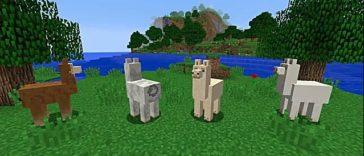 Minecraft - Cómo domar, montar y criar Llamas 1