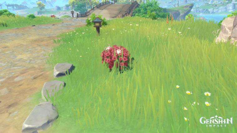 Dónde cultivar flores de seda en Genshin Impact